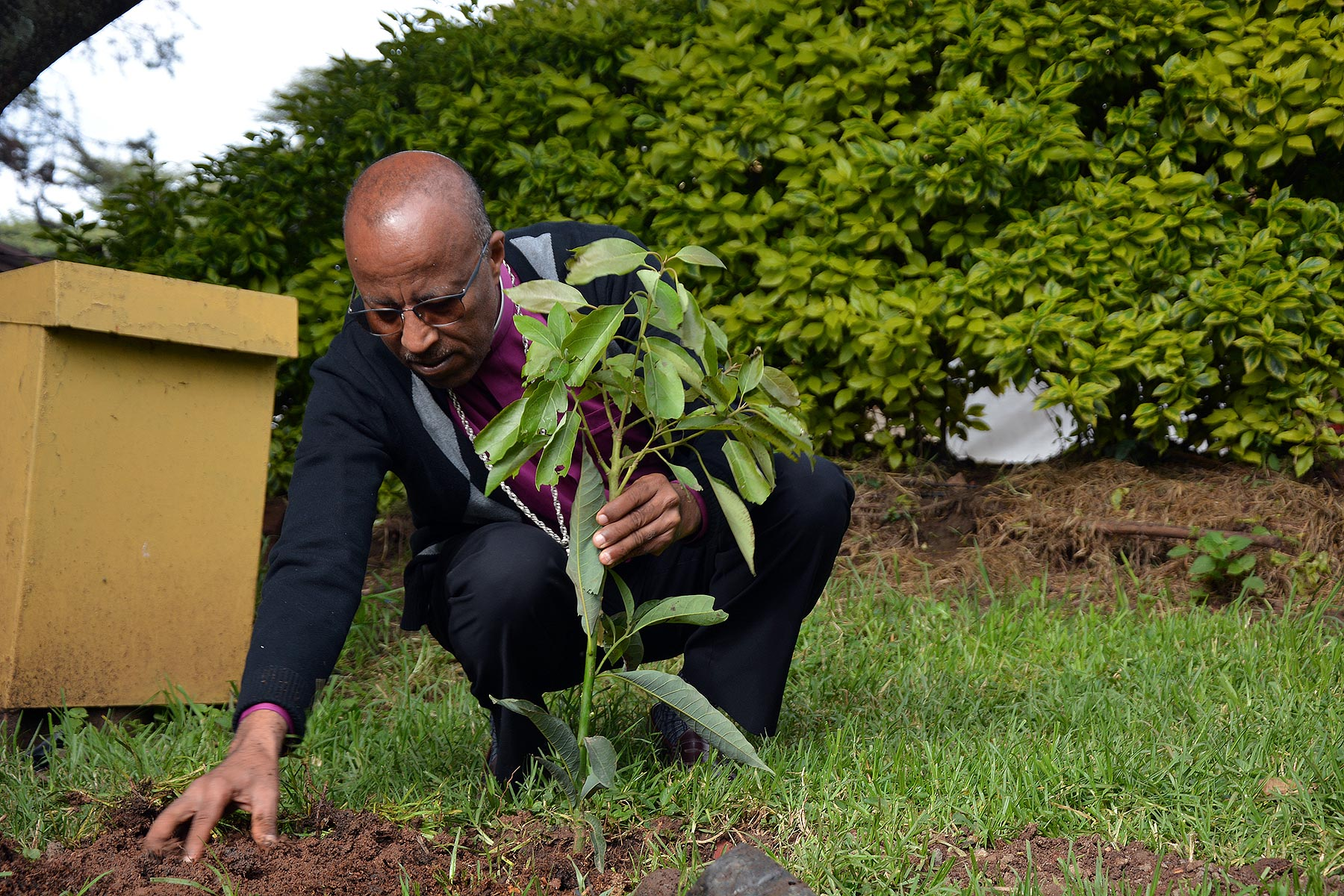 EECMY President Rev. Yonas Yigezu Dibisa plants a tree in the church compound in Addis Ababa. EECMY/Abeya Wakwoya