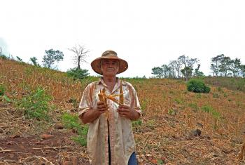 A farmer in El Salvador, showing the impact of prolonged drought on his crop of corn. LWF/C. Kästner