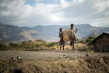 Once again, Ethiopians have to deal with a drought as the north of the country is heavily affected by El Nino. Photo: Hannah Mornement
