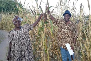 Jacob Alweendo and his wife Berfine are confident of a good millet harvest from their farm in Oipanda village, northwest Namibia. Photo:LWF/UCC-NELC