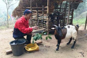 A villager named Bounla feeds one of his goat. Photo: LWF/ A. Xaysongkam