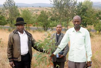 Tree plantation in the Matimba parish of the Evangelical Lutheran Church in Rwanda. Photo: LWF/J. Brummer