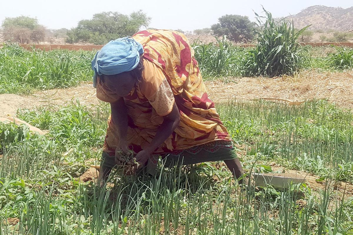 A woman works in the fields of Ouaddai Province in Eastern Chad. Photo: LWF/Allahramadji Gueldjim