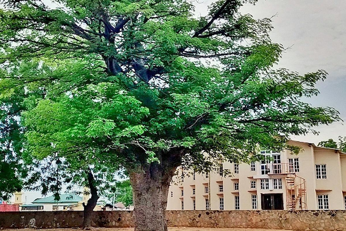 Baobab tree on the cathedral grounds in Jimeta-Yola, Adamawa State, Nigeria. Photo: Joshua T. Abu/The Lutheran Church of Christ in Nigeria