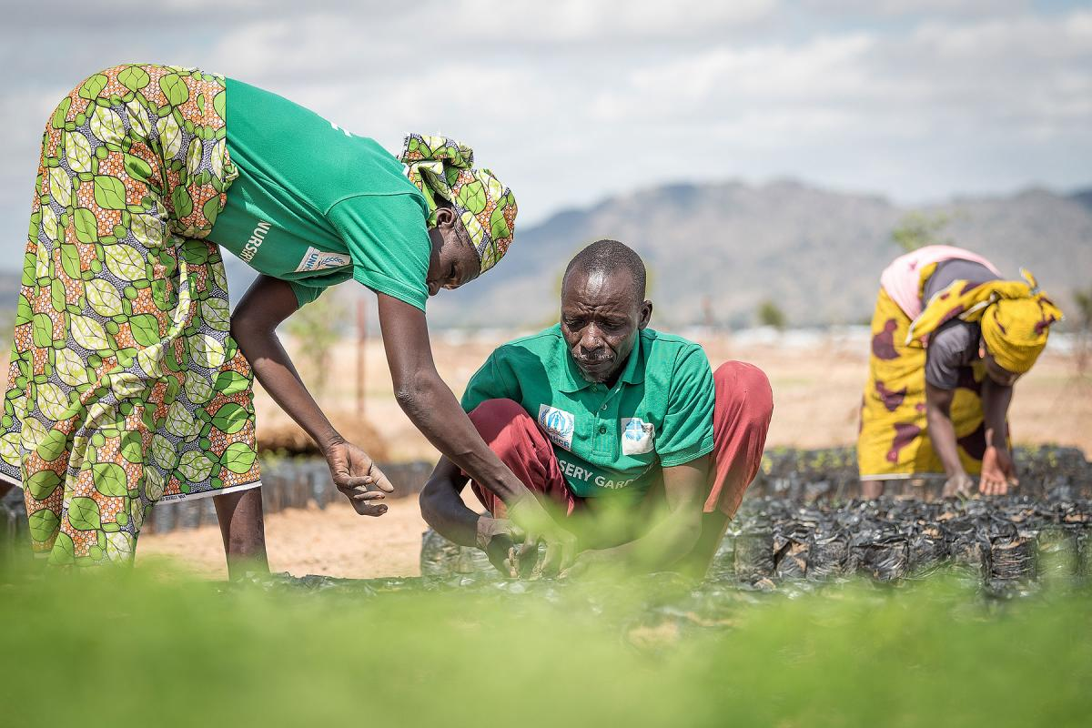 A group of refugees work in a tree nursery in the Minawao camp for Nigerian refugees. Photo: LWF/Albin Hillert