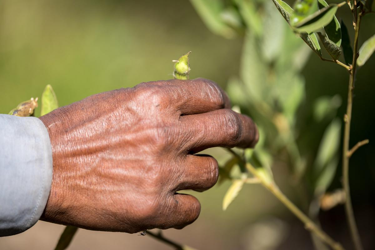 Ethiopia: Ensuring food security through training in agricultural methods suitable for a changing climate. Photo: LWF/Albin Hillert.