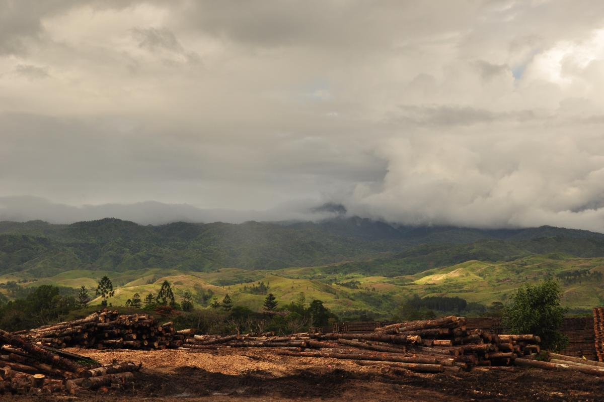 Forestry in Morobe Province - Photo: LWF/C.Richter