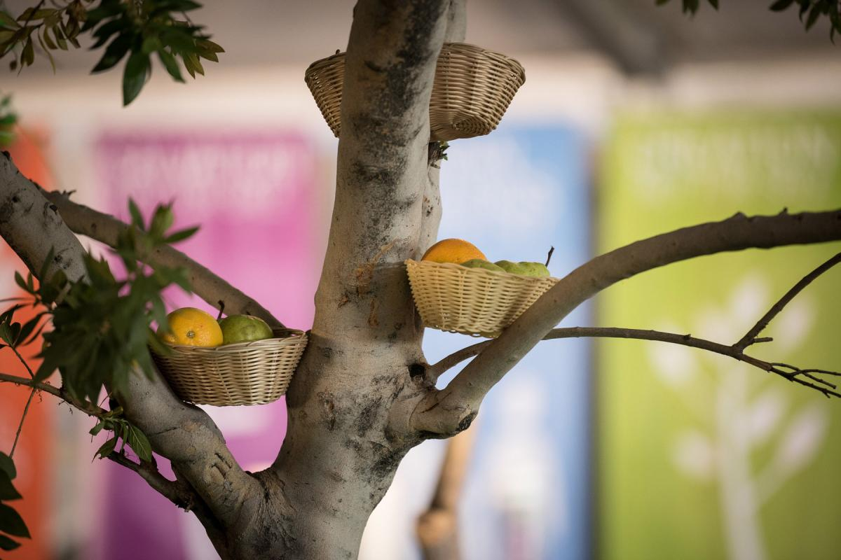 """""""Jubilee for the Earth"""" is the 2020 theme for the Season of Creation. Photo: LWF/Albin Hillert"""