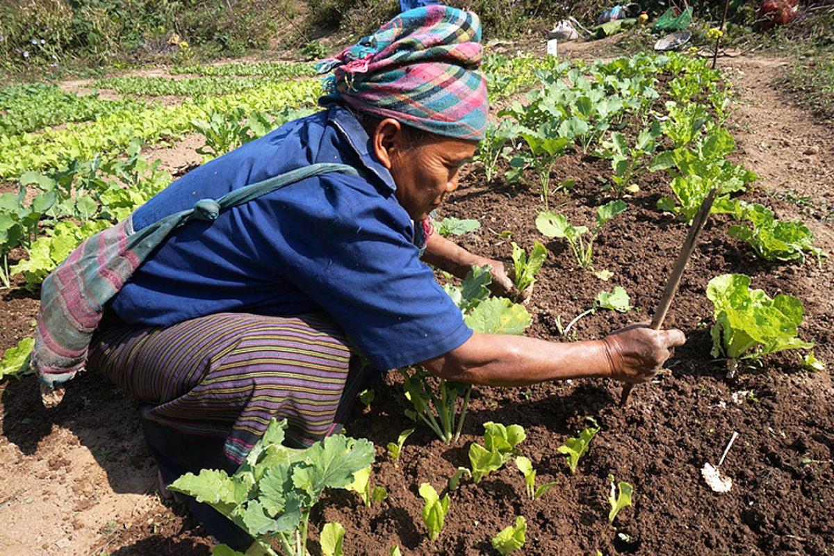 A villager from Koutou employs new agriculture techniques to produce a good crop. Photo: LWF Laos
