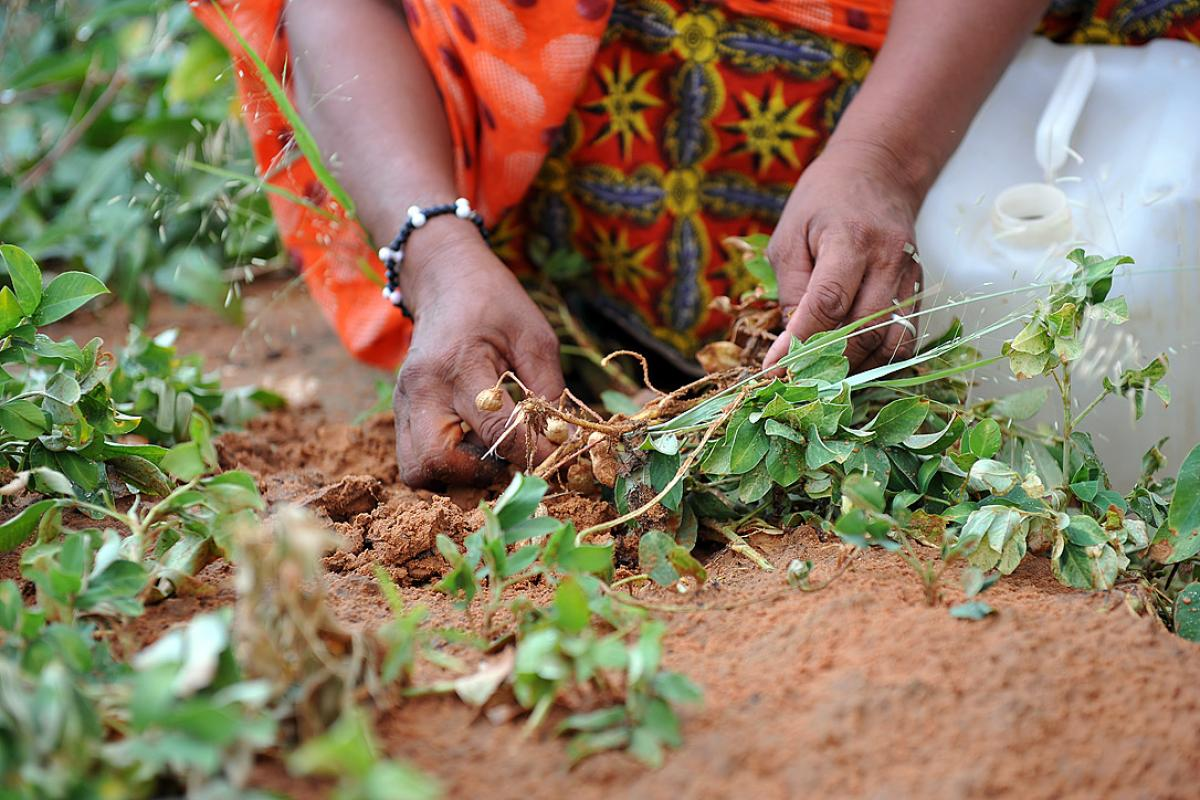 A woman tends a MARCOL training garden in Mberra camp, Mauritania. Thanks to the program Malian refugees produce more vegetables and the price of vegetables in the market has dropped. Photo: LWF/C. Kästner