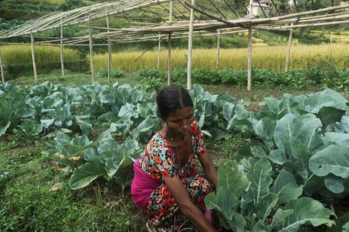 Caption: Saraswati Purkoti in her garden. Photo: LWF/ Lucia de Vries