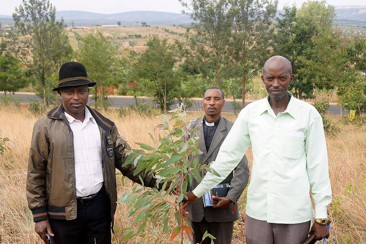 Tree plantation in the Matimba parish of the Evangelical Lutheran Church in Rwanda. Photo: LWF/J. Brummer