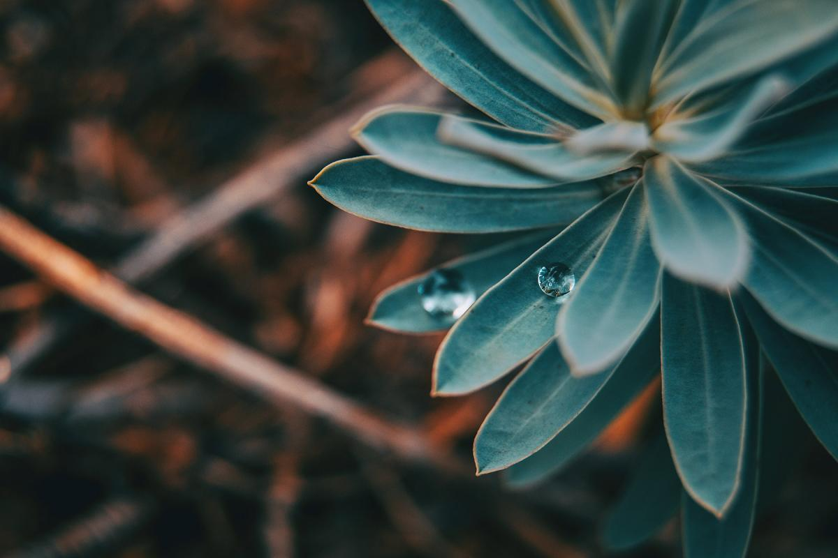 For many Indigenous people, round things in nature represent the circle of life and all creation. Often, this motive is taken up in the round shape of their dwelling places and homes. Photo: Verónica Álvarez via Unsplash