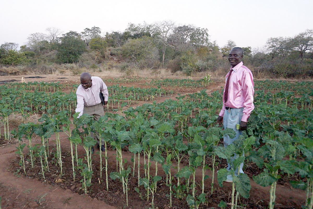 An income-generating garden for people living with HIV and AIDS in Musume, Zimbabwe. Photo: LWF/J. Brümmer